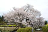 www.miyachou.com_428.jpg, SIZE:640x428(92.8KB)