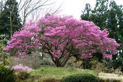 www.miyachou.com_470.jpg, SIZE:640x428(131.1KB)