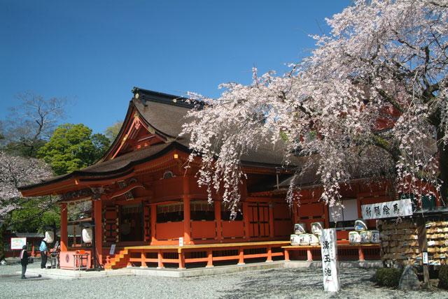 しだれ桜と拝殿